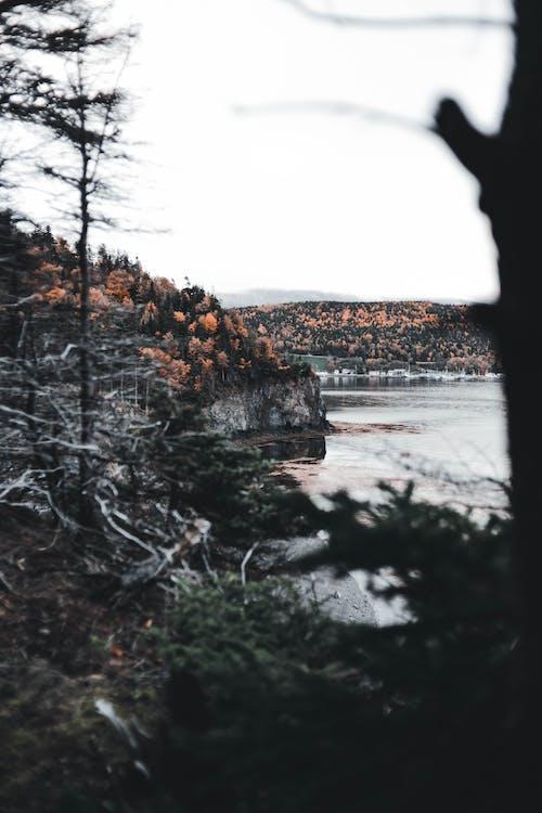 Fotos de stock gratuitas de a orillas del lago, al aire libre, árbol