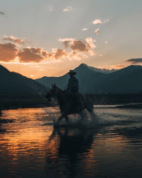 คลังภาพถ่ายฟรี ของ กลางแจ้ง, การวิ่ง, ขี่ม้า