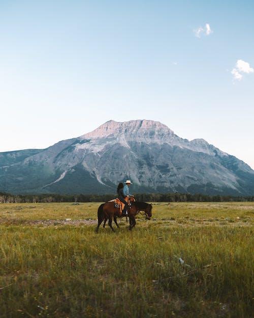 คลังภาพถ่ายฟรี ของ กลางแจ้ง, การเดิน, ขี่ม้า