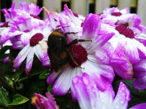Fotos de stock gratuitas de #de cerca, #hermoso, #naturaleza, #primavera