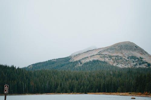 Δωρεάν στοκ φωτογραφιών με copy space, βουνό, δασικός