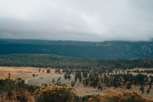 Fotos de stock gratuitas de al aire libre, árbol, bosque