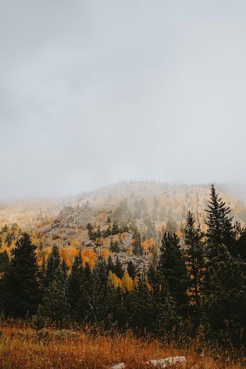 Imagine de stoc gratuită din arbori, ceață, codru