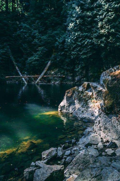Бесплатное стоковое фото с вода, голубая вода, деревья, дневной свет
