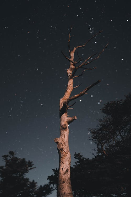 Withered Tree in Forest at Night