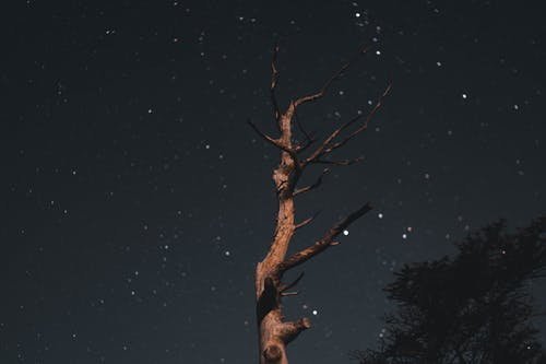 Withered Tree at Night