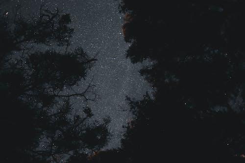 Directly Below Night Sky in Forest