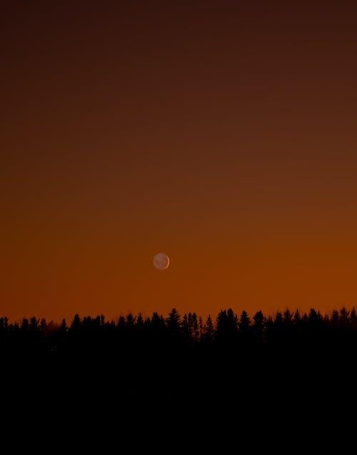 Immagine gratuita di alba, albero, colore