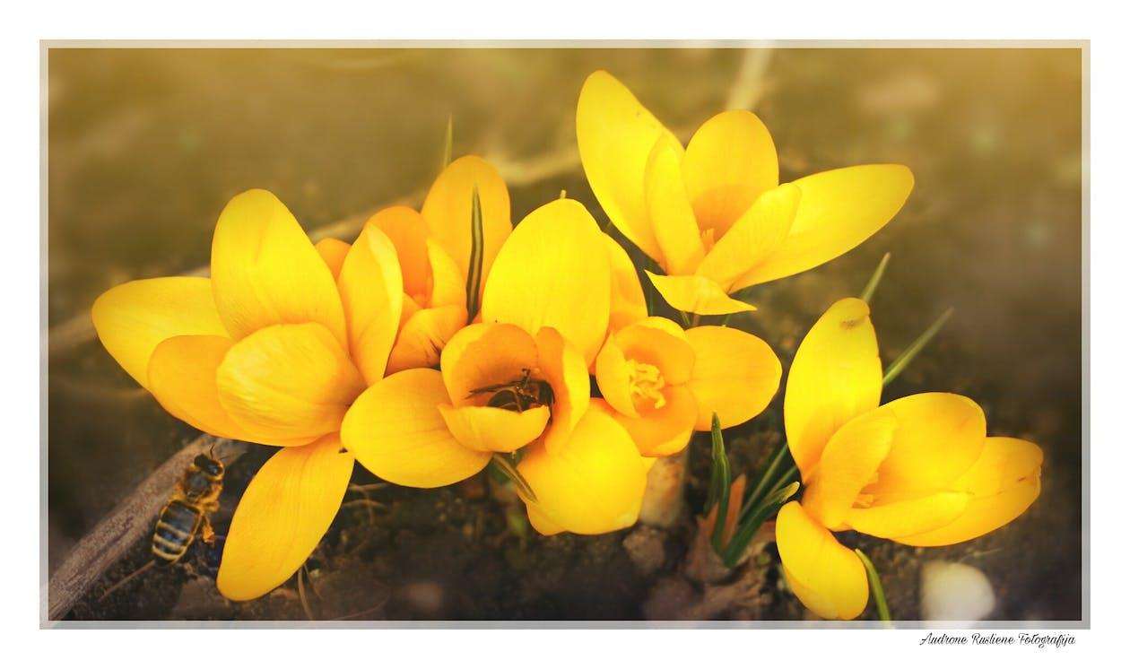 Foto Stok Gratis Tentang Alam Bunga Bunga Indah Jatuh Cinta