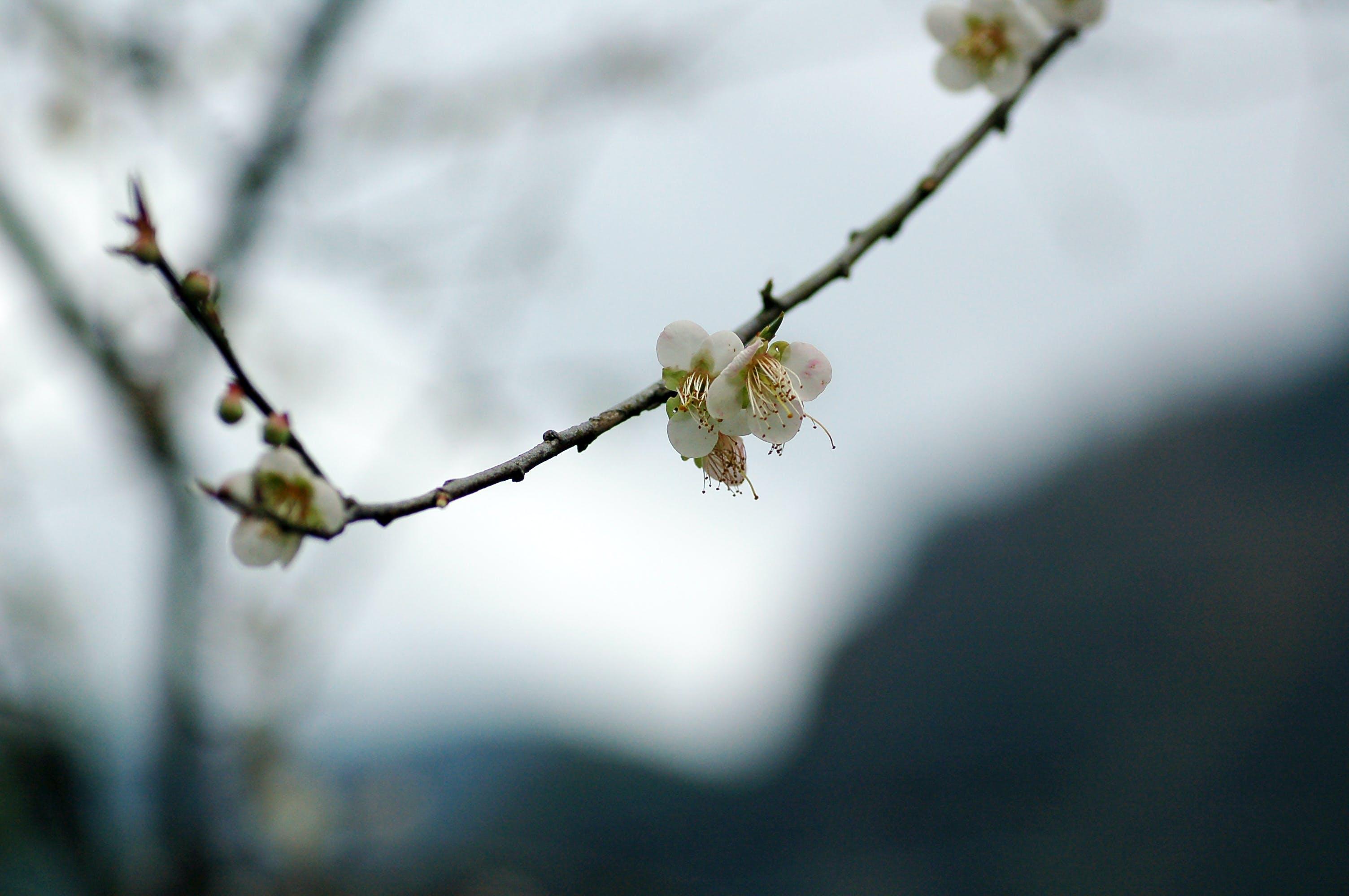 branch, flower