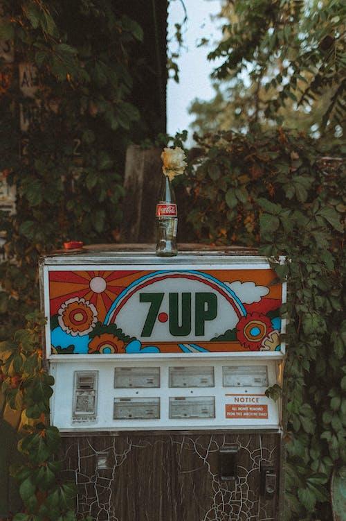 Immagine gratuita di bevanda, bottiglia, commercio