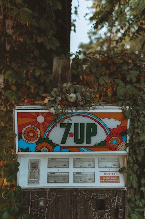 Photos gratuites de automne, boire, centrale