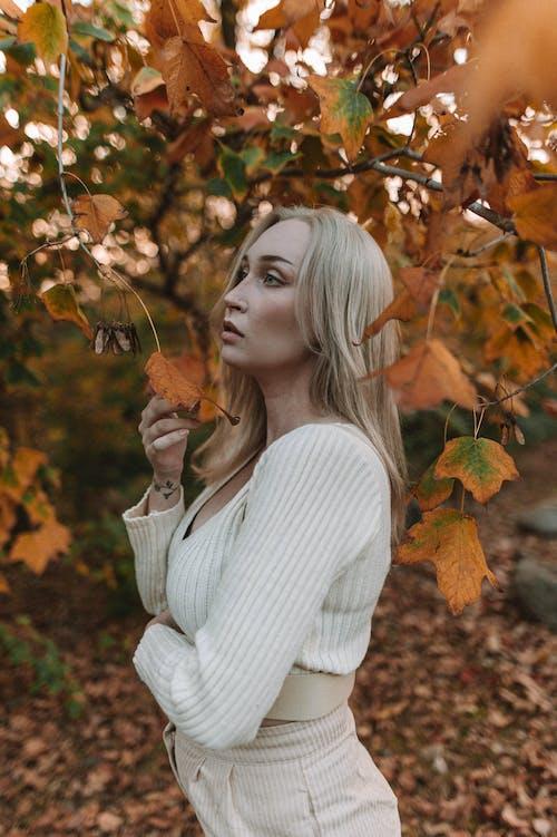 Photos gratuites de adulte, automne, branches