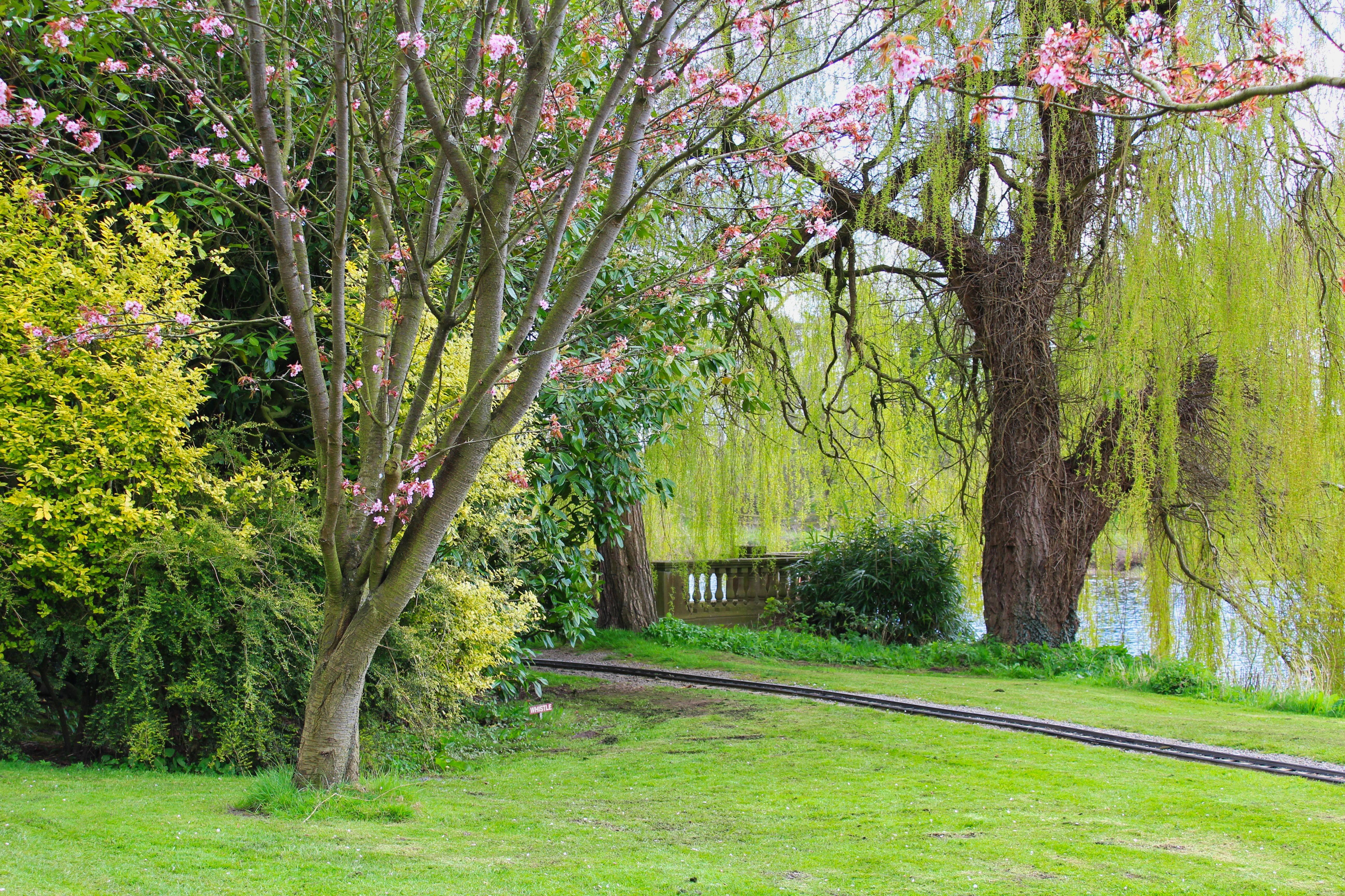 Free stock photo of blossom, newby hall, trees, Willow
