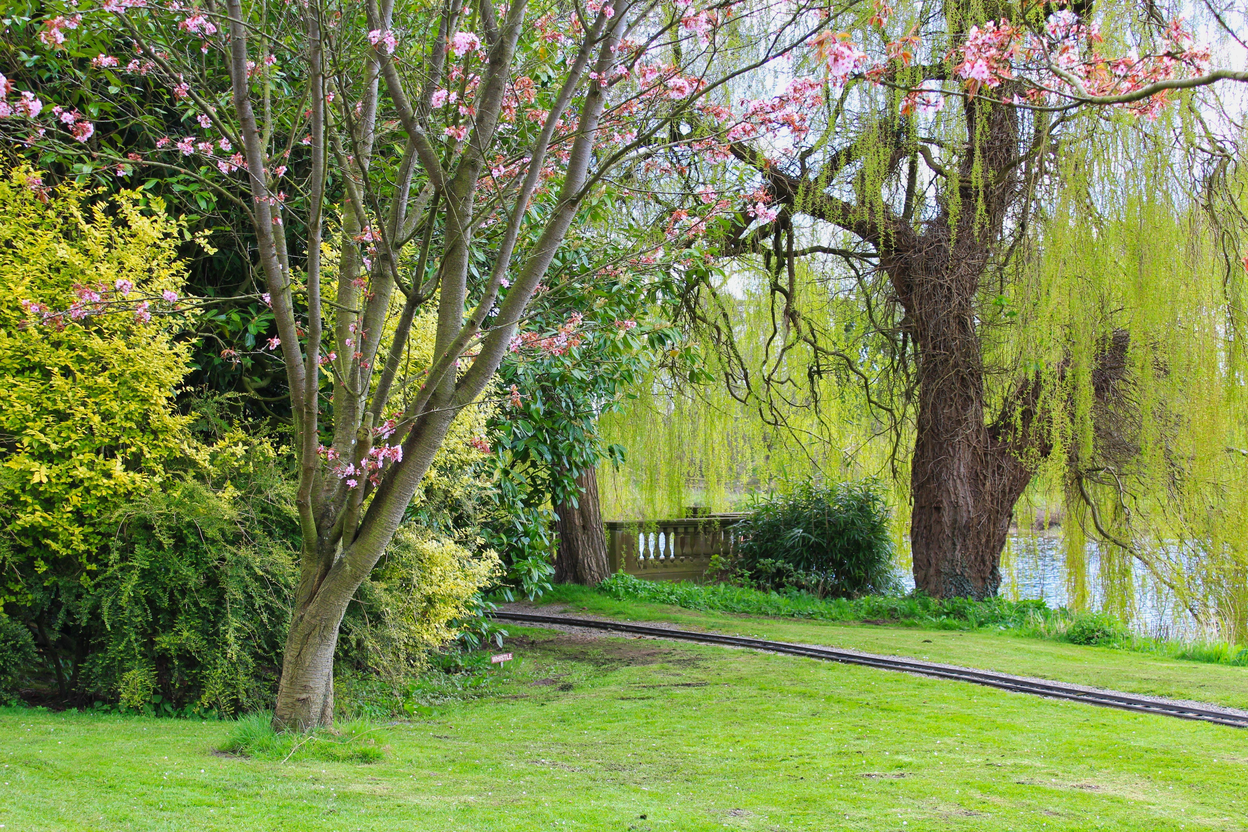 Foto d'estoc gratuïta de arbres, flor, nou vestíbul, salze