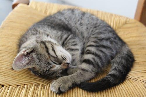 Kostenloses Stock Foto zu kätzchen, katze, klein, zusammengerollt