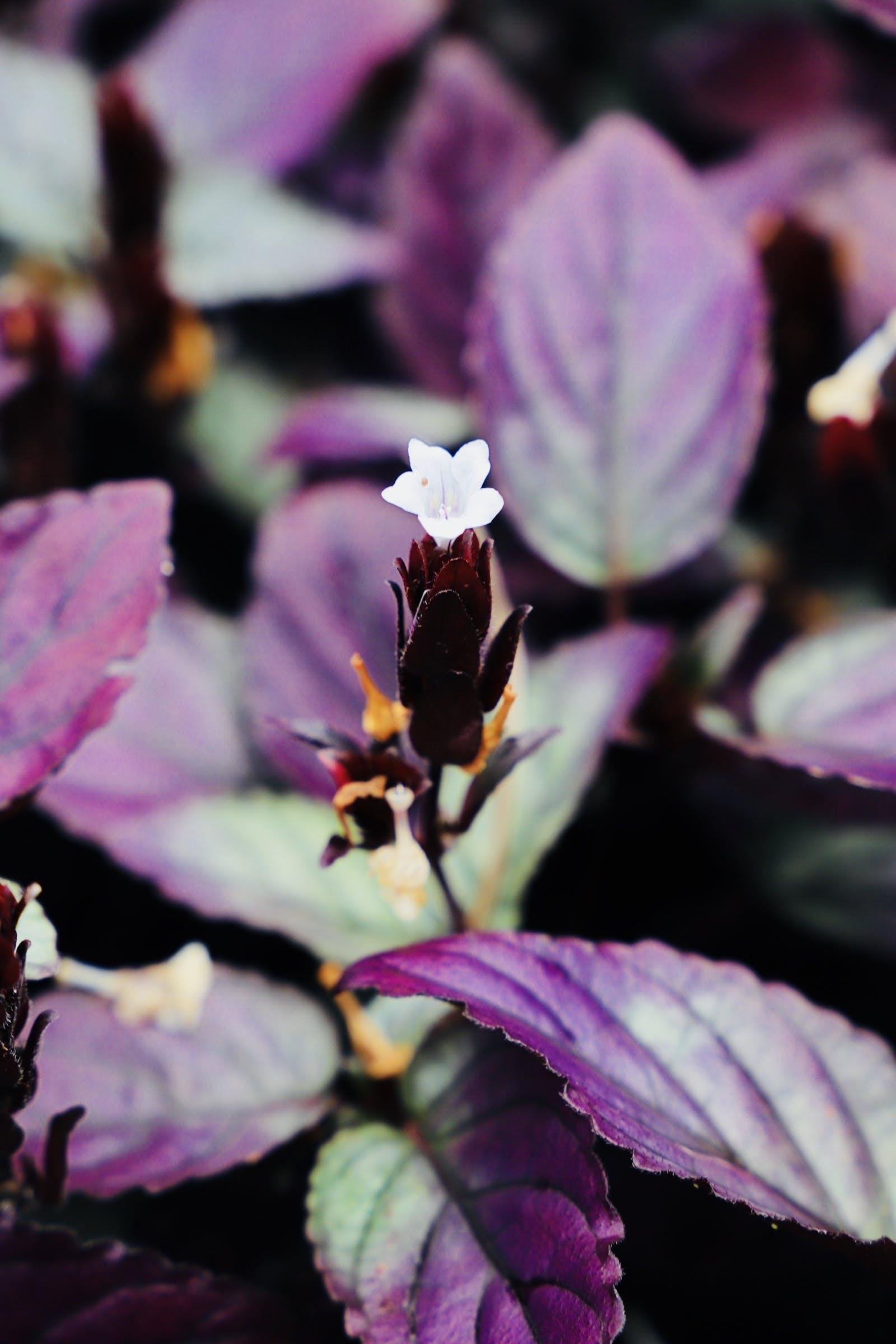 Gratis lagerfoto af hawaiian blomster