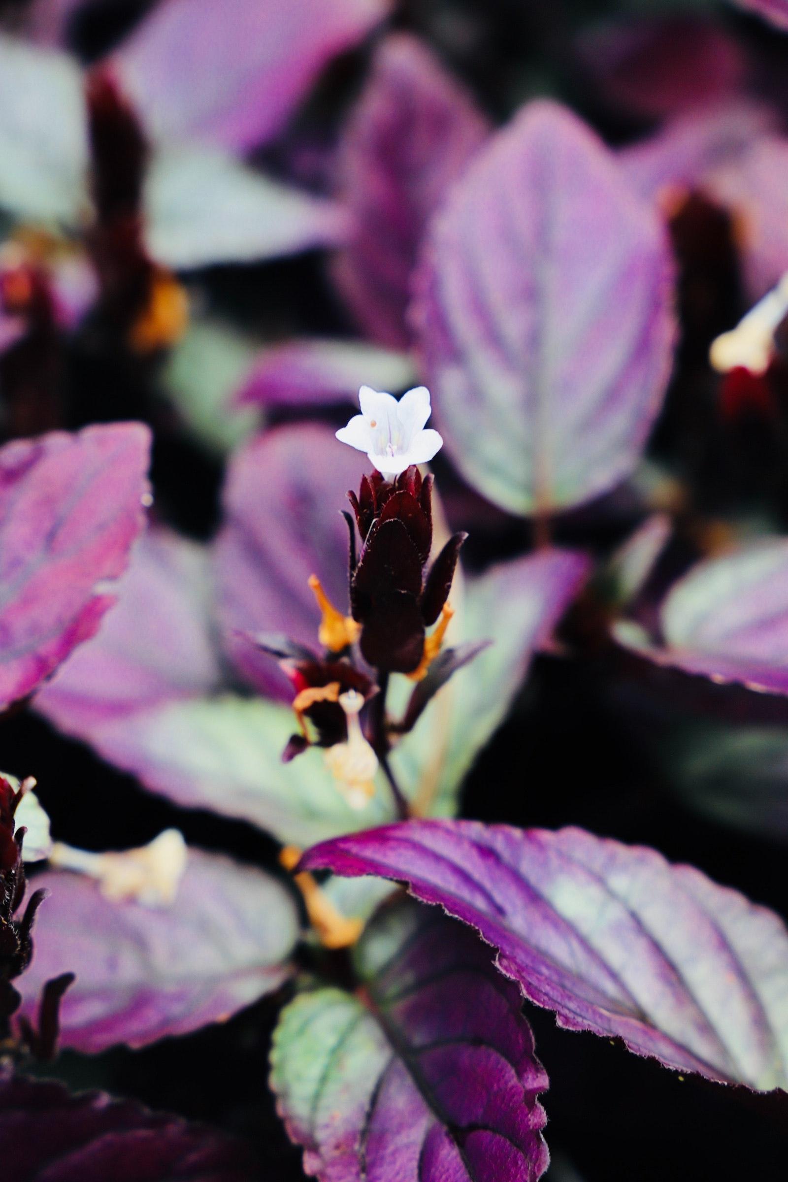 Free stock photo of hawaiian flowers free download izmirmasajfo Images