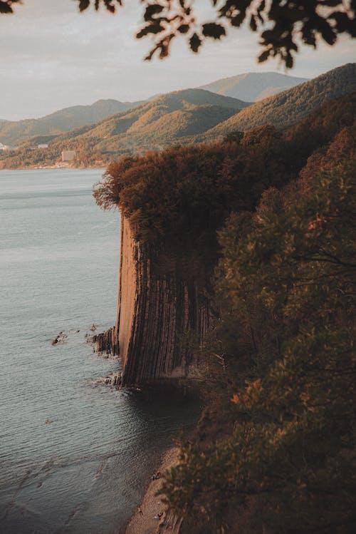 Imagine de stoc gratuită din apă, arbore, codru