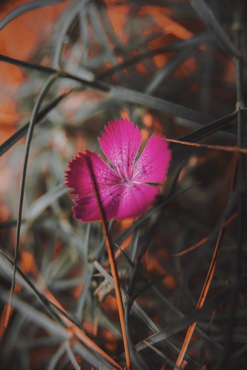 Fotobanka sbezplatnými fotkami na tému botanika, divý kvet, exteriéry