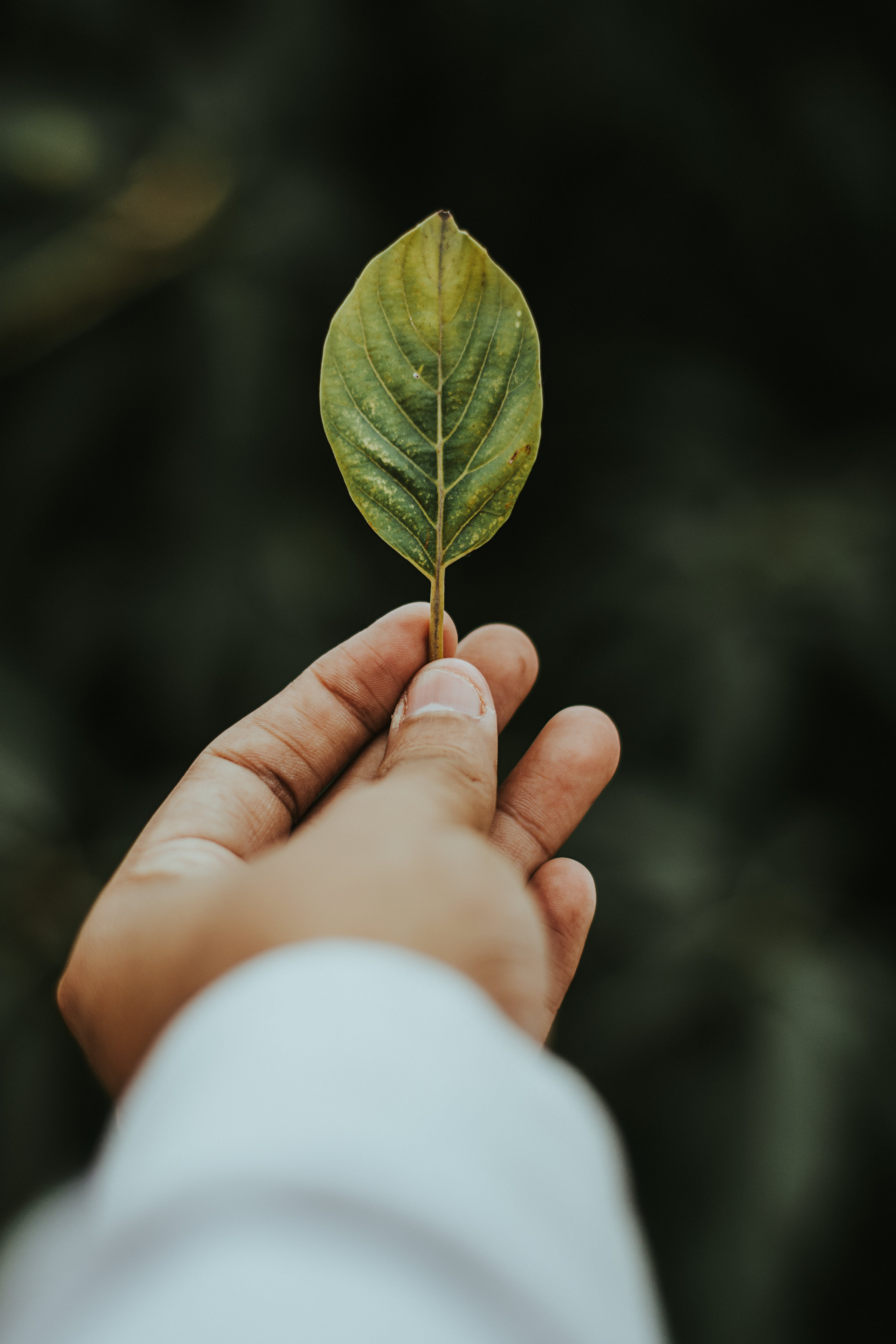Shallow Focus Photography of Person Holding Green Leaf
