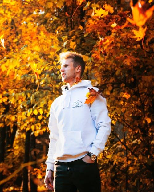 Free stock photo of adult, autumn, autumn colours