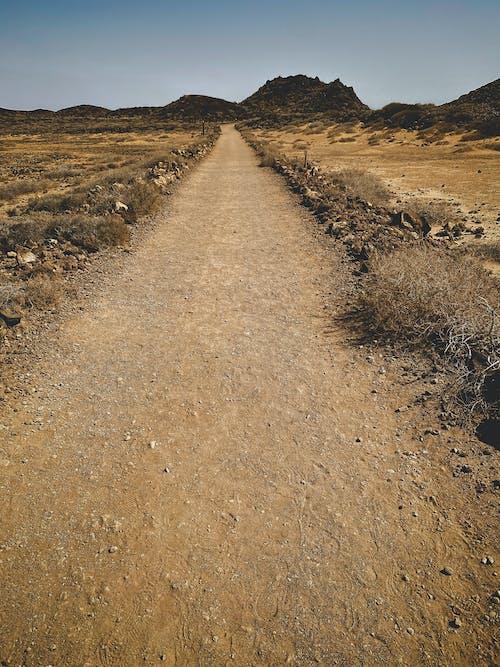 Brown Dirt Road Between Brown Grass Field