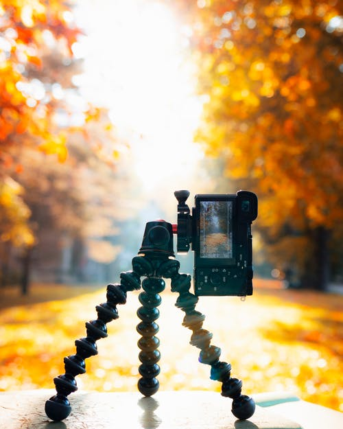 Free stock photo of analogue, art, autumn