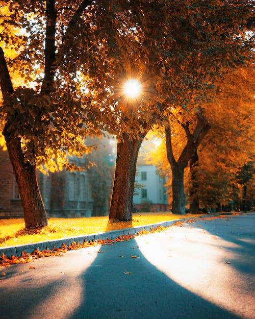 Free stock photo of alley, autumn, autumn atmosphere