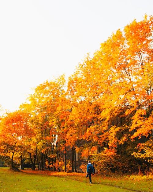 Free stock photo of autumn, autumn atmosphere, autumn background