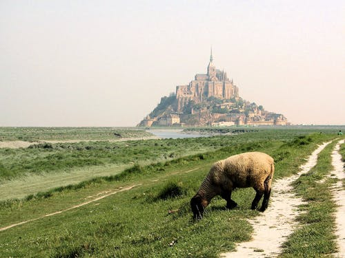 Free stock photo of france, mont saint-michel, normandy, sheep
