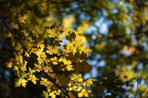 Autumn Colored Leaves on Tree Branch