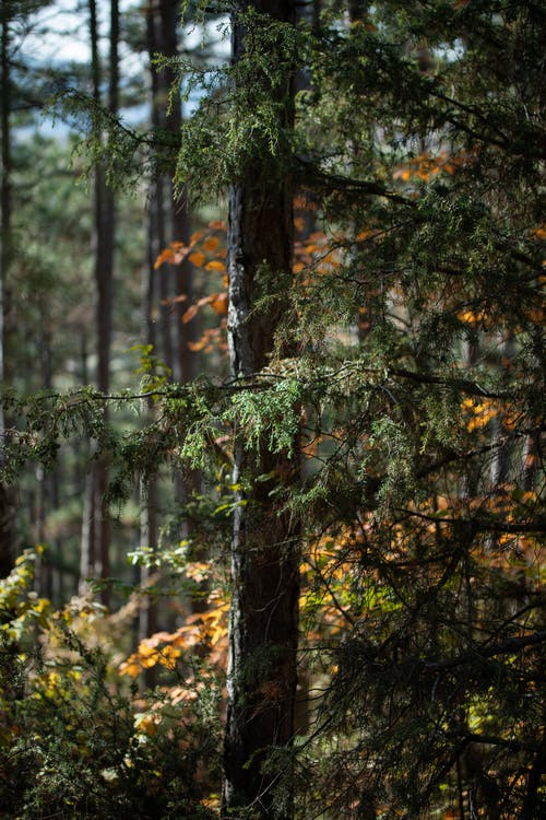 View of Forest in Autumn