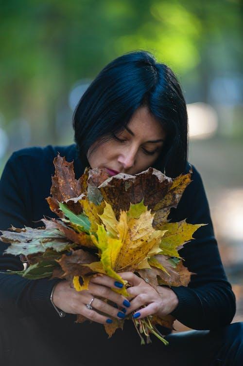 Gratis stockfoto met blad, bloem, buiten