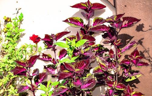 Immagine gratuita di bocciolo, campo, fiore