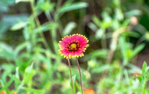 Immagine gratuita di bocciolo, botanica, fiore
