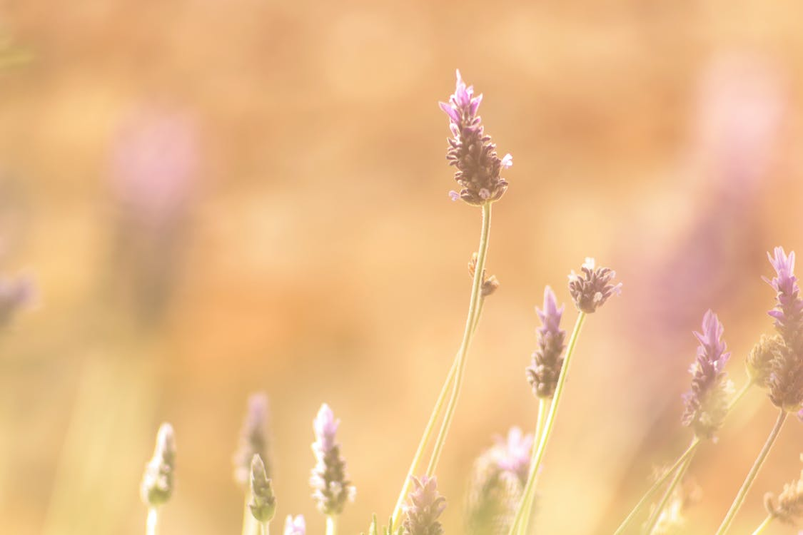 bloeien, bloemen, bloesem
