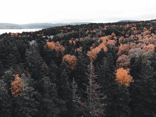 Δωρεάν στοκ φωτογραφιών με αυγή, βουνό, γραφικός