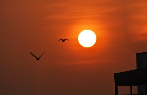 Free stock photo of Banglore, nikon, sunrise