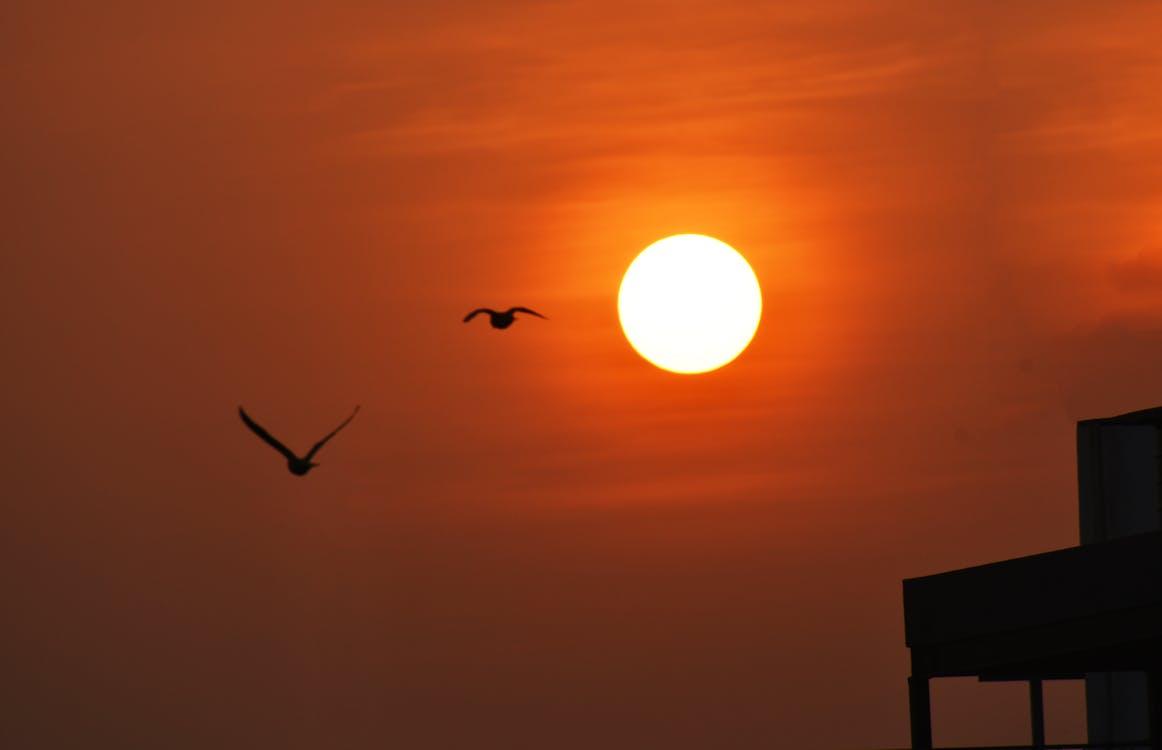 ニコン, バングロア, 日の出