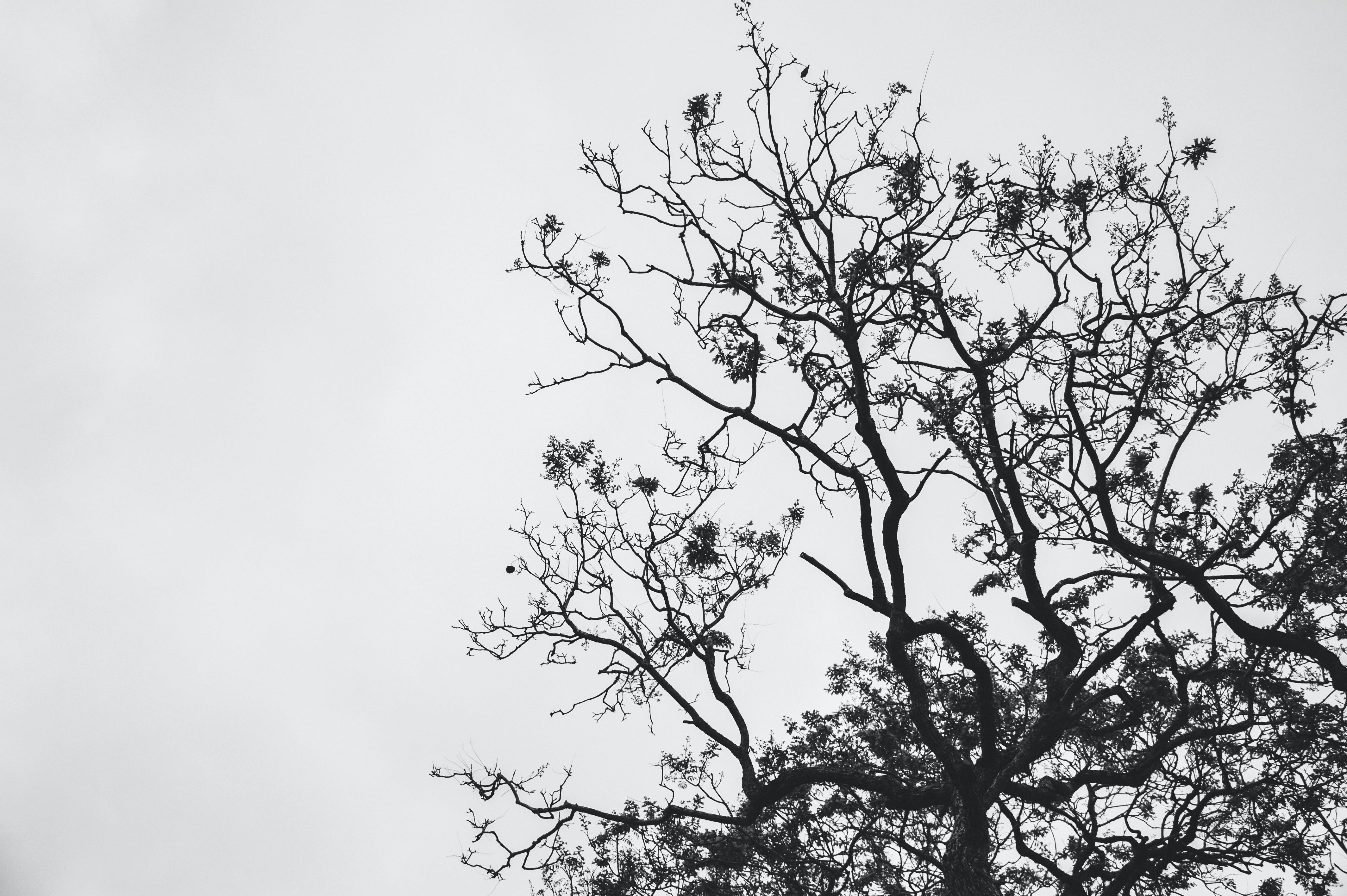Silhouette Photo of Withered Tree