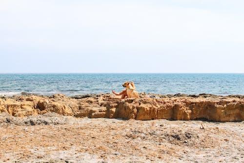 Foto profissional grátis de água, animal, areia, beira-mar