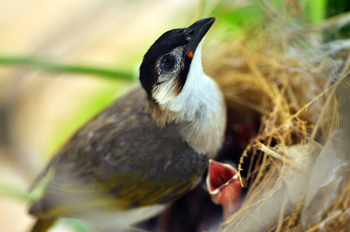 Selective Focus Photography of White and Brown Bird Perching on Nest