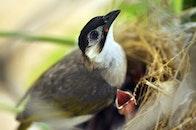birds, bird's nest