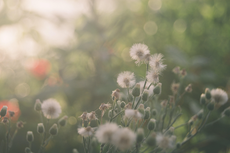 Základová fotografie zdarma na téma barva, botanický, flóra, hřiště