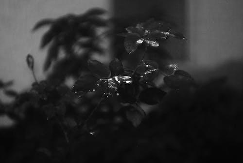 Бесплатное стоковое фото с абстрактный, вода, дерево