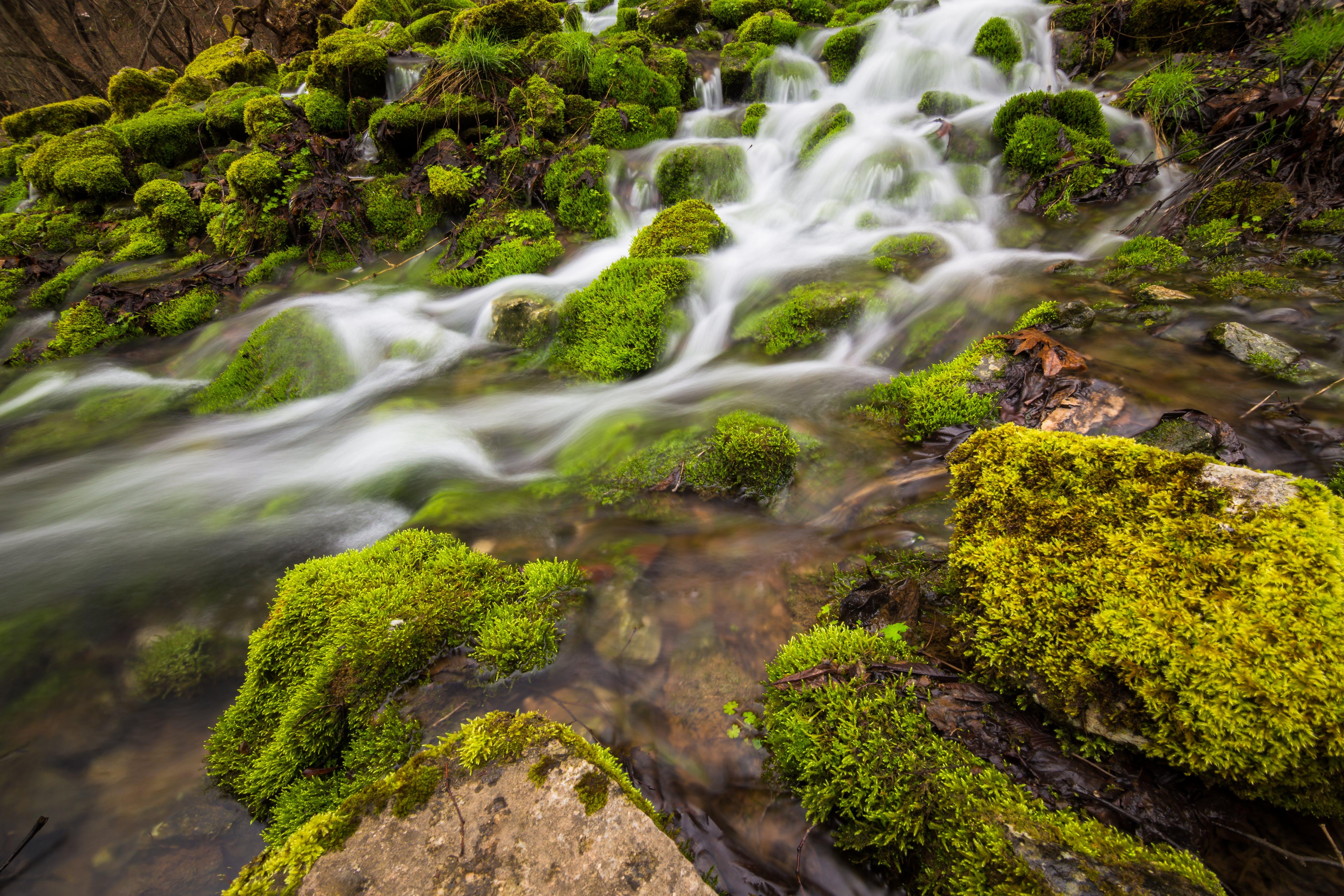 Foto d'estoc gratuïta de aigua, arbres, cascada, corrent