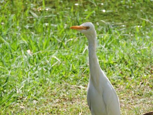 クレーン, 自然, 自然写真の無料の写真素材