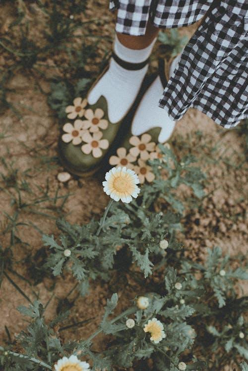 Základová fotografie zdarma na téma holka, klasický, kytka, noha
