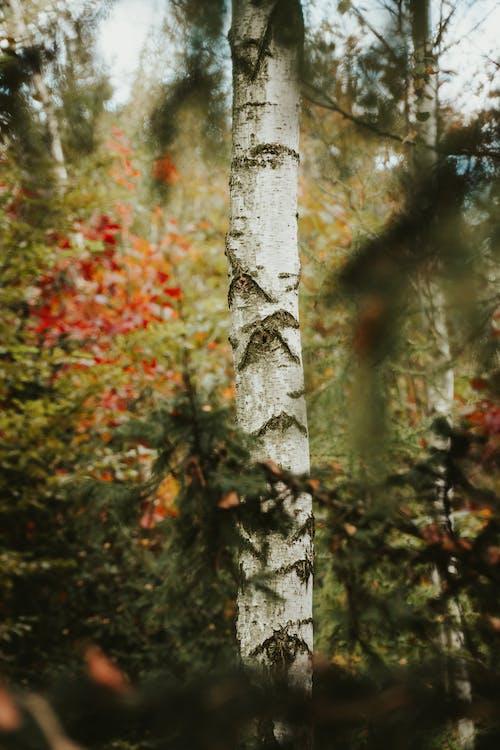Ilmainen kuvapankkikuva tunnisteilla biodiversiteetti, kauneus luonnossa, lehti